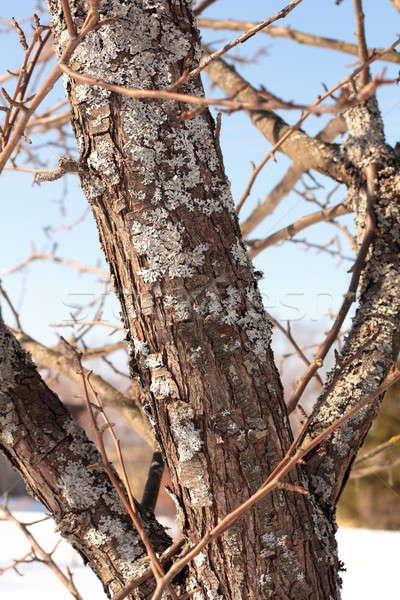 árvore fungo coberto jardim textura floresta Foto stock © bendzhik