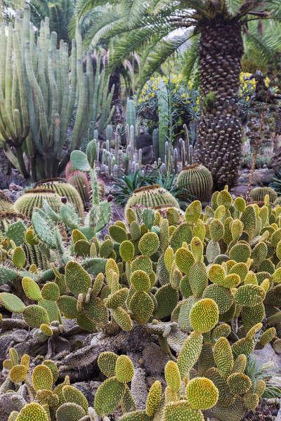 Cactus Park - Gran Canaria Stock photo © benkrut