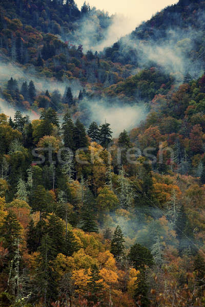 Morning in Smoky Mountains   Stock photo © benkrut