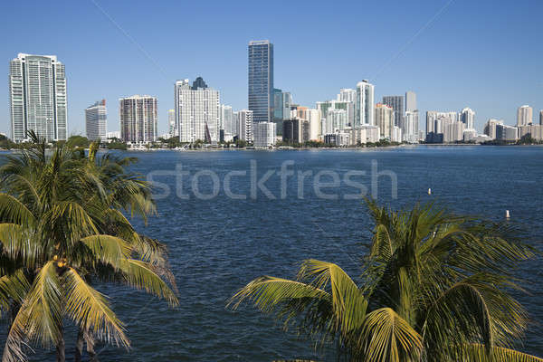 Pálmafák sziluett Miami Florida USA üzlet Stock fotó © benkrut