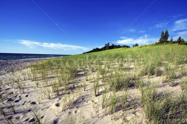 Sand Dunes by the shore of Lake Michigan Stock photo © benkrut