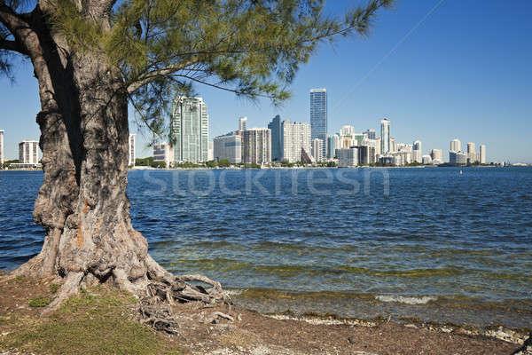 Fák sziluett Miami Florida USA üzlet Stock fotó © benkrut