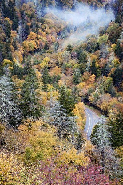 Cars driving through Smoky Mountains Stock photo © benkrut