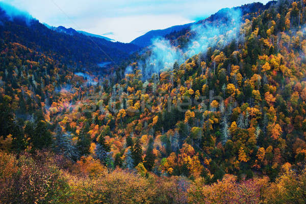 Morning in Smoky Mountains - colorful trees Stock photo © benkrut