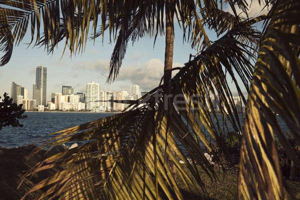 Miami palmeiras Flórida escritório água árvore Foto stock © benkrut