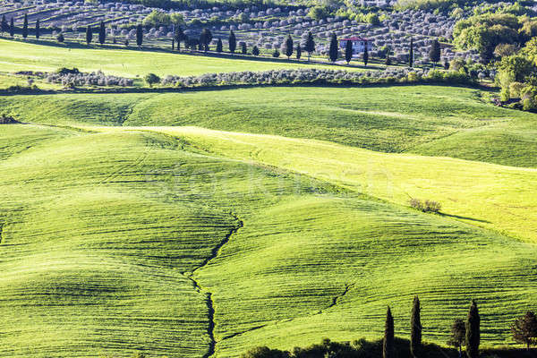 Stock photo: Tuscany spring landscape