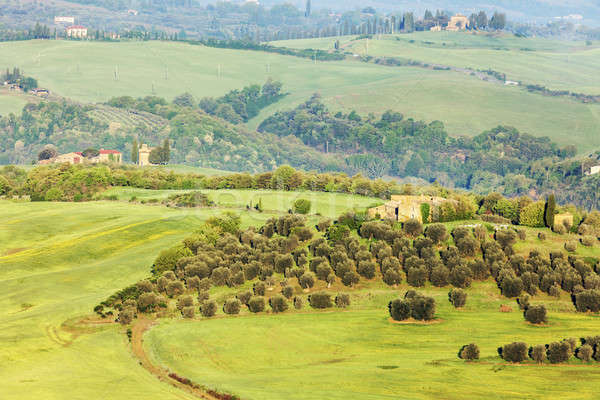 Green Tuscany landscape  Stock photo © benkrut