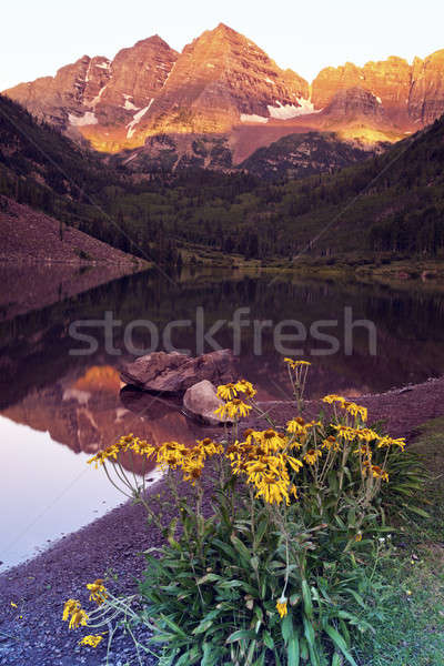 Foto stock: Marrom · nascer · do · sol · montanhas · flor · verão · viajar