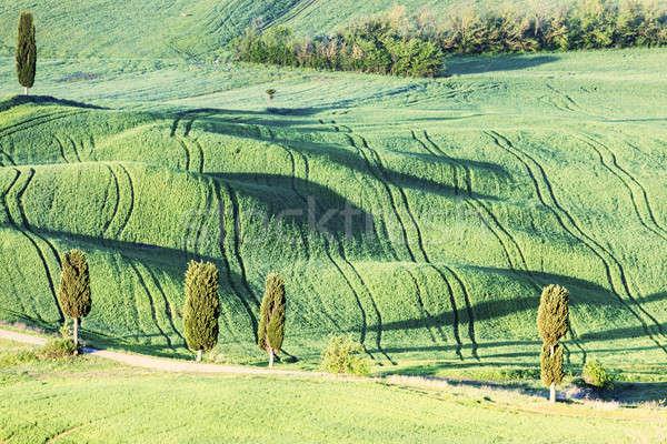 Тоскана пейзаж зеленый утра Италия дерево Сток-фото © benkrut