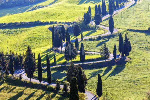 Tuscany landscape in the morning Stock photo © benkrut