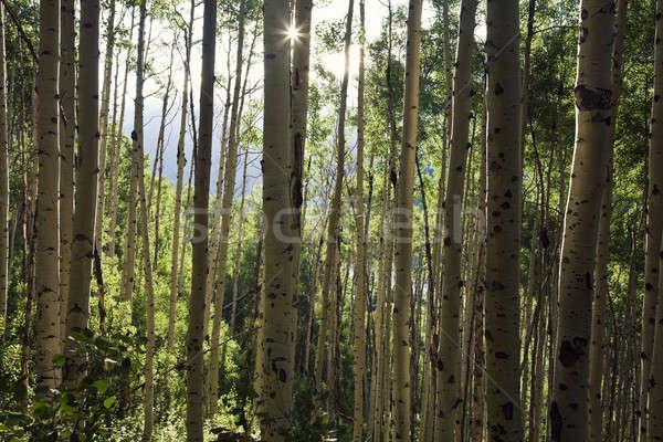 Foto stock: árvores · montanhas · cratera · lago · trilha · marrom