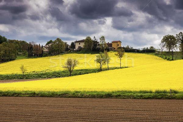 Stock photo: Tuscany landscape - canola field
