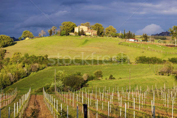 Тоскана пейзаж закат Италия дерево город Сток-фото © benkrut
