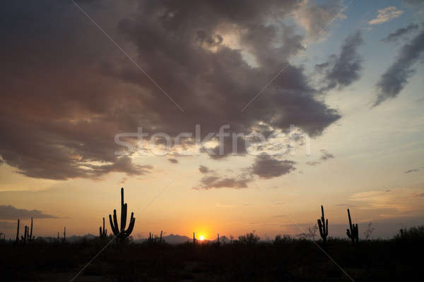 Sunset in Saguaro NP Stock photo © benkrut