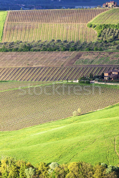 Toscane paysage printemps Italie arbre nature Photo stock © benkrut
