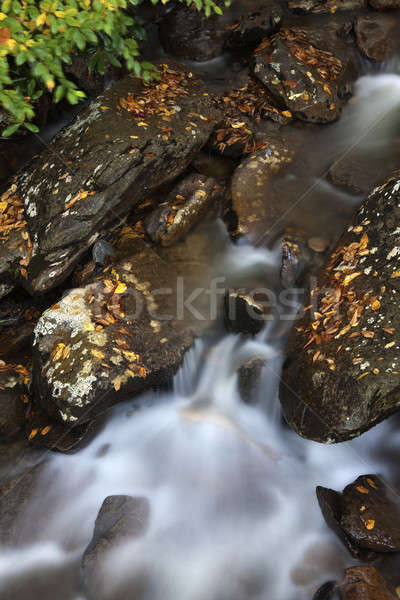 ручей дымчатый гор парка осень время Сток-фото © benkrut