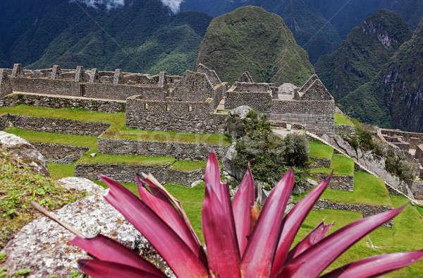 Kleurrijk Machu Picchu plant ruines Peru bloem Stockfoto © benkrut