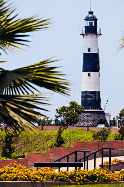 Deniz feneri lima Peru hurma ağacı ağaç siyah Stok fotoğraf © benkrut