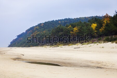 Beach in Wolin National Park Stock photo © benkrut