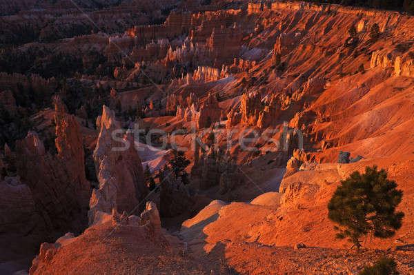 Sunrise Panorama in Bryce National Park Stock photo © benkrut