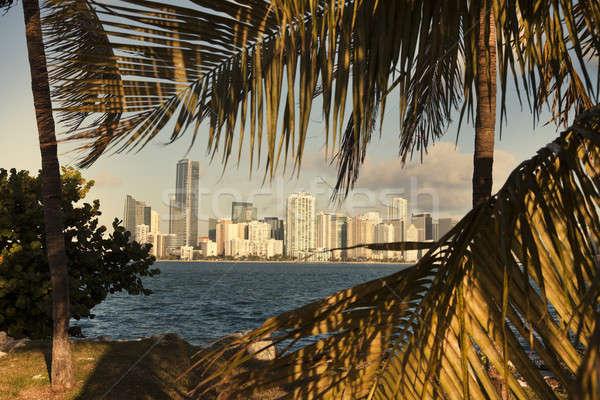 Miami palmbomen Florida kantoor water boom Stockfoto © benkrut