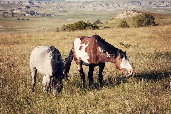 Wild paarden park North Dakota Stockfoto © benkrut