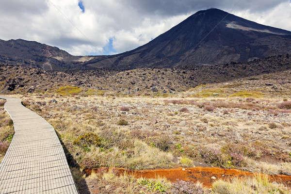 Parcours park wijk noorden eiland New Zealand Stockfoto © benkrut