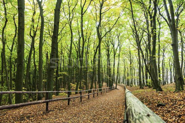 Sikátor park nyugat fa zöld utazás Stock fotó © benkrut