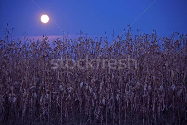 Lua cheia acima milho campo Foto stock © benkrut