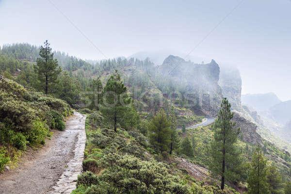 Trail to Roque Nublo in fog Stock photo © benkrut