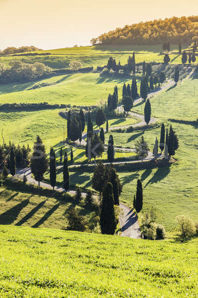 Tuscany landscape Stock photo © benkrut