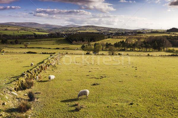 Irlanda Reino Unido cielo primavera campo Foto stock © benkrut