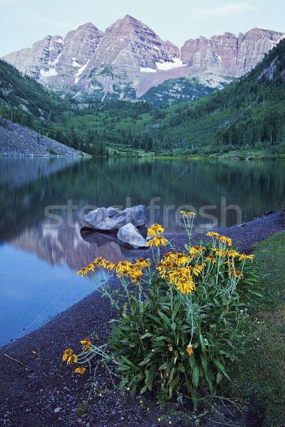 Sárga virágok gesztenyebarna virág hegy nyár utazás Stock fotó © benkrut