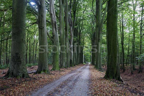 Scary alberi albero foresta viaggio Europa Foto d'archivio © benkrut