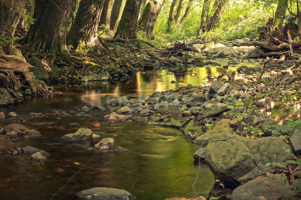 Deep forest creek with rocks Stock photo © berczy04