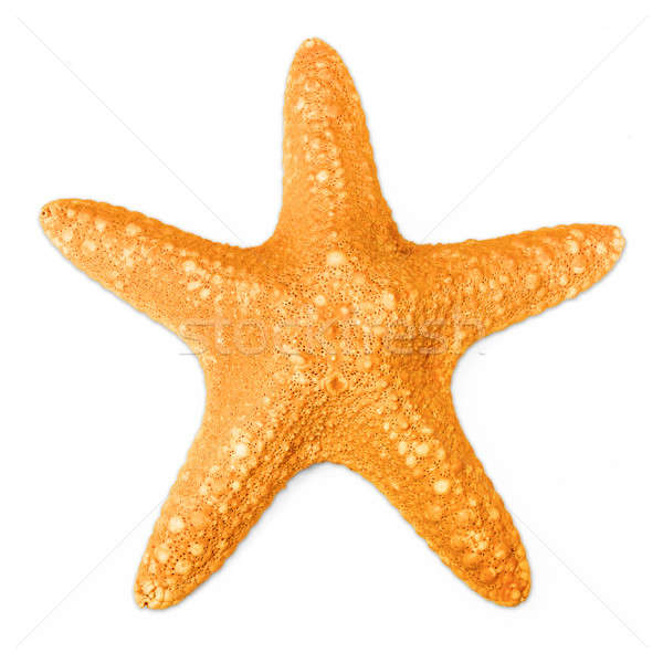 Starfish isolated on white Stock photo © berczy04