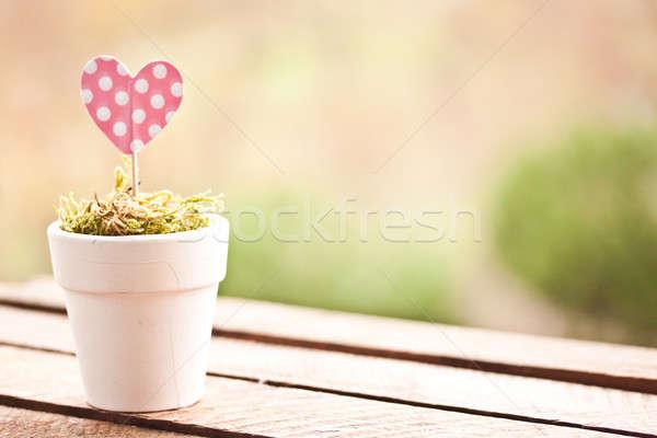 Rózsaszín pötty szív papír edény zöld Stock fotó © bernashafo