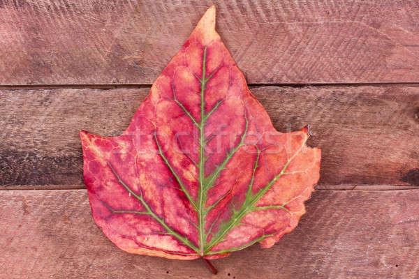 autumn leaf Stock photo © bernashafo
