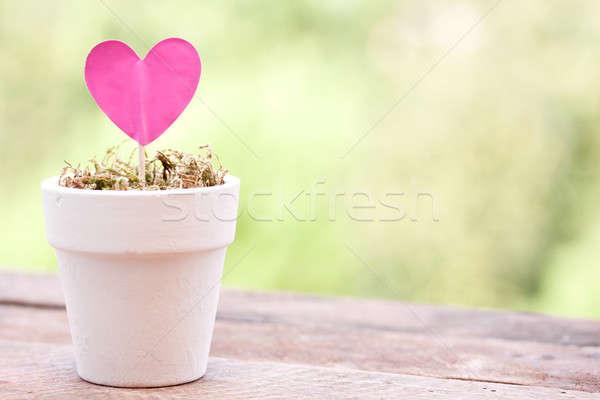 Rosa Papier Herz Topf Blume Liebe Stock foto © bernashafo