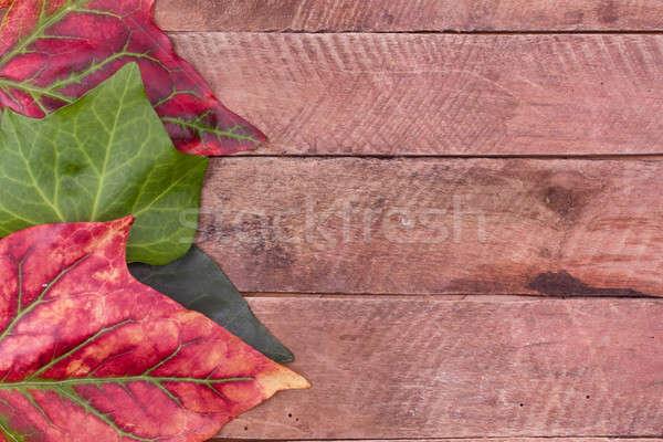 autumn leaves Stock photo © bernashafo
