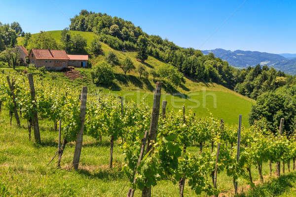 トスカーナ 畑 オーストリア 春 自然 風景 ストックフォト © Bertl123