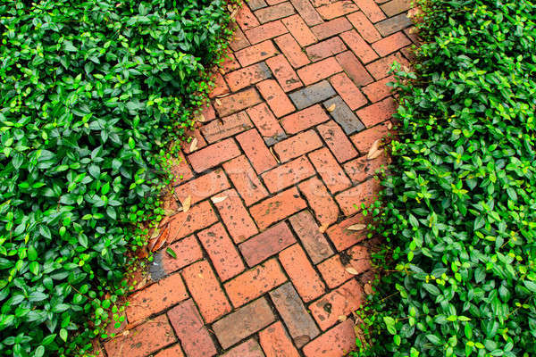 Red brick pathway in the garden Stock photo © Bertl123