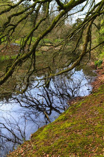 Beautiful tree branches hanging into  lake Stock photo © Bertl123
