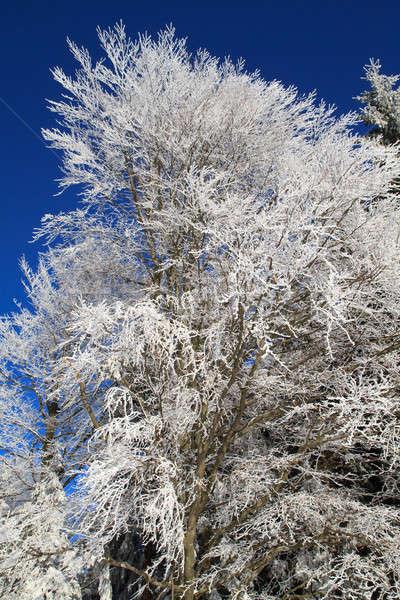 белый зима страна чудес лесу дерево пейзаж Сток-фото © Bertl123