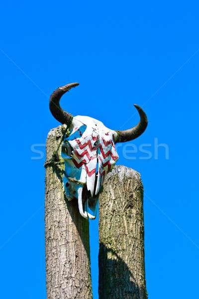 Animaux crâne texture bois nature désert Photo stock © Bertl123