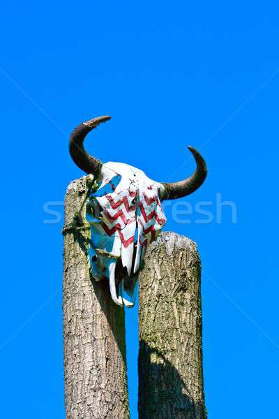 Animal skull on totem Stock photo © Bertl123