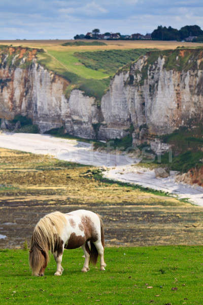 Horse on cliffs near Etretat and Fecamp, Normandy, France Stock photo © Bertl123