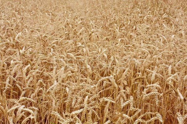 Панорама продовольствие природы фон лет Сток-фото © Bertl123