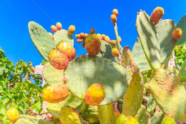 Gyönyörű közelkép kaktusz növény kék ég színes Stock fotó © Bertl123