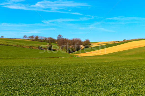 зеленый области Blue Sky пейзаж небе дерево Сток-фото © Bertl123